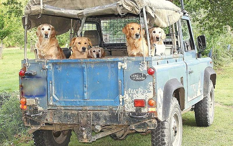 Never Leave the Dog Behind – Off-Roading with Man's Best Friend
